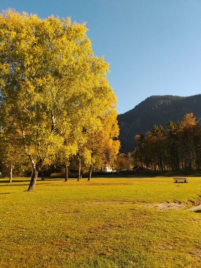 Landscape Naturelovers Autumn colors Beauty In Nature Wallpaper Nature Autumn Freshness Trees Austria Tree_collection  Environmental Conservation Nature Photography Wonderful View Beautiful Nature Wonderful Place Travel Environment Traveling Beautiful Sunset Tree Yellow Sky Grass Farmland Tranquility Idyllic Calm Scenics