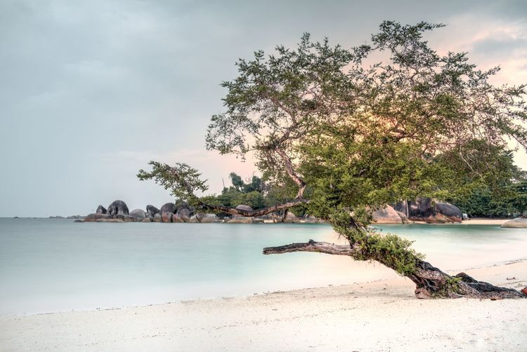 Beach Beauty In Nature Belitung Cloud - Sky Exotic Exotic Beach INDONESIA Indoors  Nature Non-urban Scene Outdoors Paradise Pastel Colors Peace Sand Scenics Sea Sky Sunset Tranquil Scene Tranquility Traquility Tree Tropical Water The Great Outdoors - 2017 EyeEm Awards