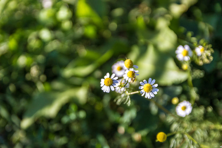 Close-up of honey bee on flower tree
