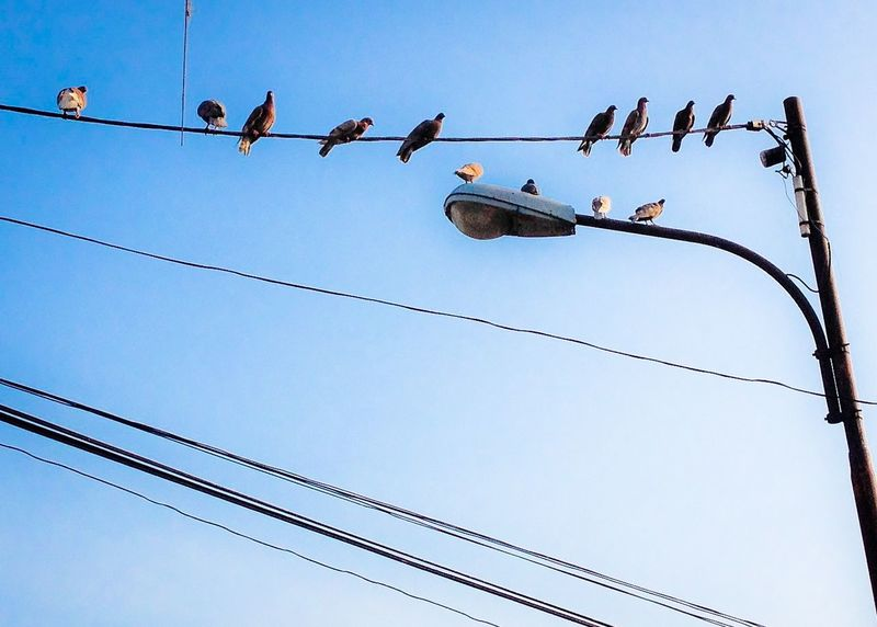 Birds on cable Birds Cable Cable Railway Sky Bluesky Lamp Post Streetphotography Outdoor Day No People Arrangement Low Angle View
