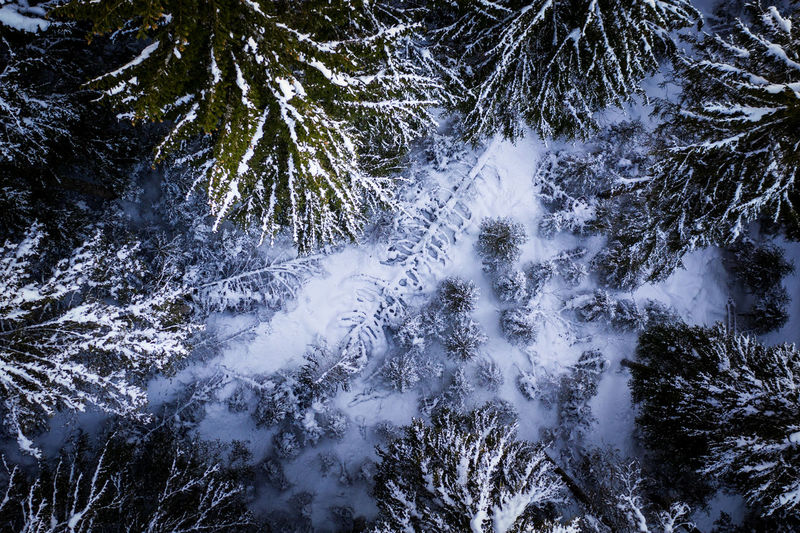 Tree Plant Beauty In Nature No People Scenics - Nature Nature Land Forest Day Cold Temperature Tranquility Snow Winter Tranquil Scene Growth Outdoors Non-urban Scene Flowing Water Motion Pine Tree Coniferous Tree Flowing Aerial View Black Forest