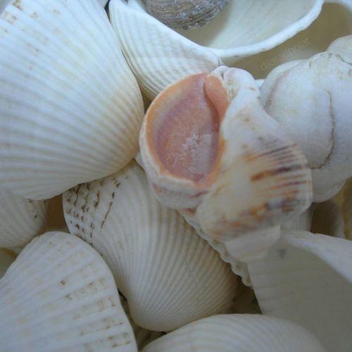 Artık yaz gelsin... 😕 ımisssummer Yaz Deniz Karadenizkabukları sea summerday yazıözledim white Turkey nofilter noeffect