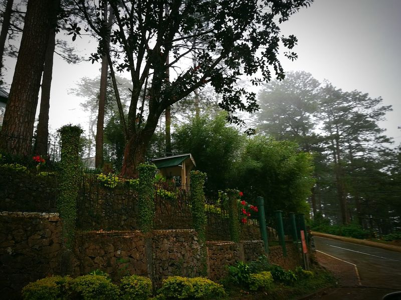 Nature Road Fog Cold Morning Rainy Days Travel Journey Relaxing Joy Ride Blessed  Weather