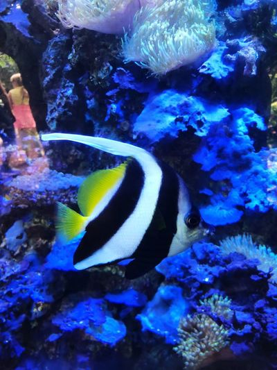 Fish Animal Wildlife Animal Themes Underwater Water Sea Life Swimming Coral No People UnderSea Fish Nature Beauty In Nature