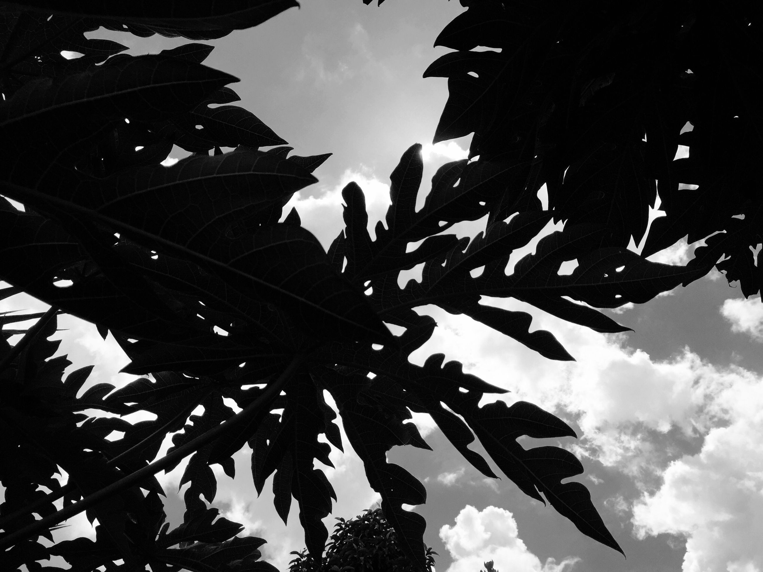 low angle view, sky, leaf, cloud - sky, growth, tree, cloudy, nature, branch, cloud, day, outdoors, building exterior, built structure, leaves, architecture, no people, sunlight, close-up, beauty in nature