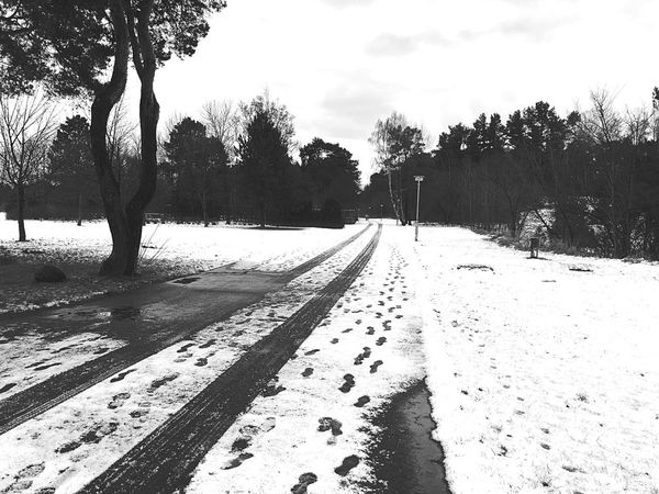 Snow Black & White Photography Blackandwhite Photography EyeEm Nature Lover Cold Temperature Wintertime Snow Tree The Way Forward Snow Nature Winter Cold Temperature Diminishing Perspective Day Weather Tranquil Scene Outdoors Road Sky Beauty In Nature Tire Track No People Landscape Scenics