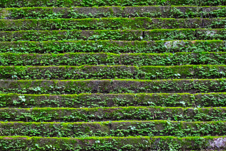 Green taacrgngm on old walls Background Texture Backgrounds Green Green Taacrgngm On Old Walls Growth Photography Taactgngm Water