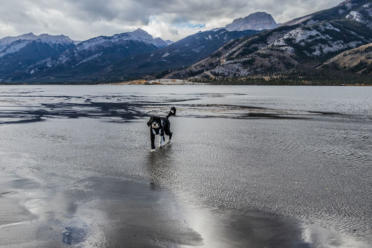 Scenic view of lake by snowcapped mountains against sky with a dog at jasper national park