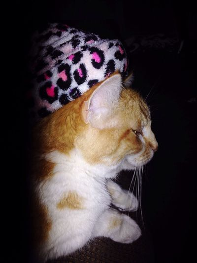 Nothing beats the comfort of a good hat 👒🎩🎓⛑😍 Pets One Animal Indoors  My Baby Angel Wouldnt Change Her For Anything Wouldn't Trade Her For The World♡ My Sunshine Everyday Treausrecat Catwearingahat Love ♥