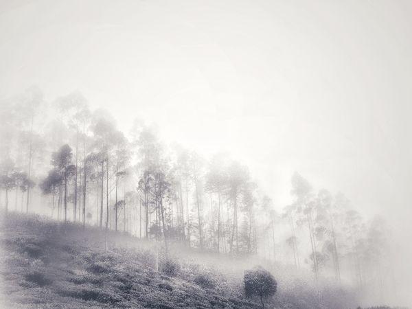 Under the fog at Rancabali Tea Plantation Tree No People Outdoors Winter