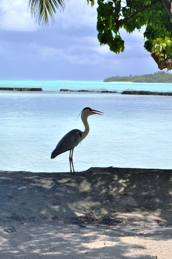 High angle view of gray heron perching on beach against sky