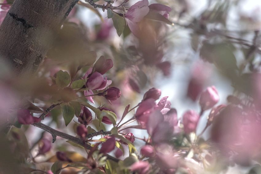 Flower Head Tree Flower Defocused Backgrounds Branch Beauty Closing Springtime Rural Scene Flowering Plant Plant Life In Bloom Blossom