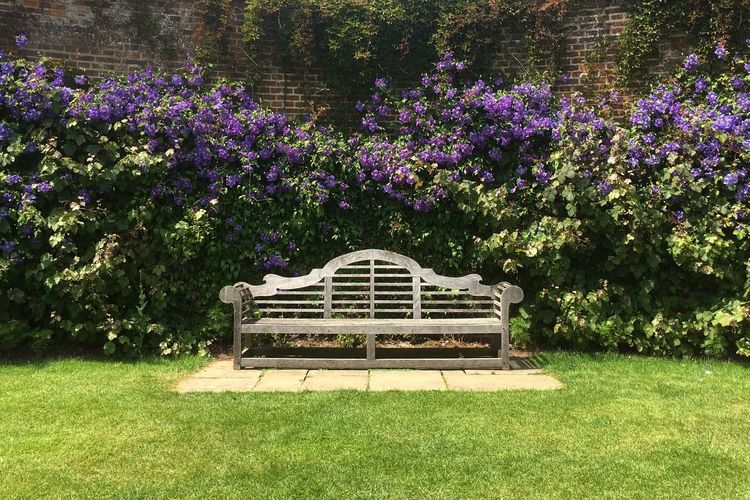 Tranquil garden Castle Garden Purple Purple Color Green Green Color Flower Flowers Garden Bench National Trust Park - Man Made Space Nature Beauty In Nature Grass Green Color Outdoors Tranquility No People
