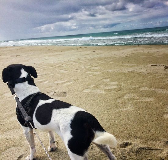 Norwegian Landscape Beach Land Sea Mammal Animal Water Domestic Animals Pets Sand One Animal Dog Canine Nature Sky Horizon Over Water No People Domestic