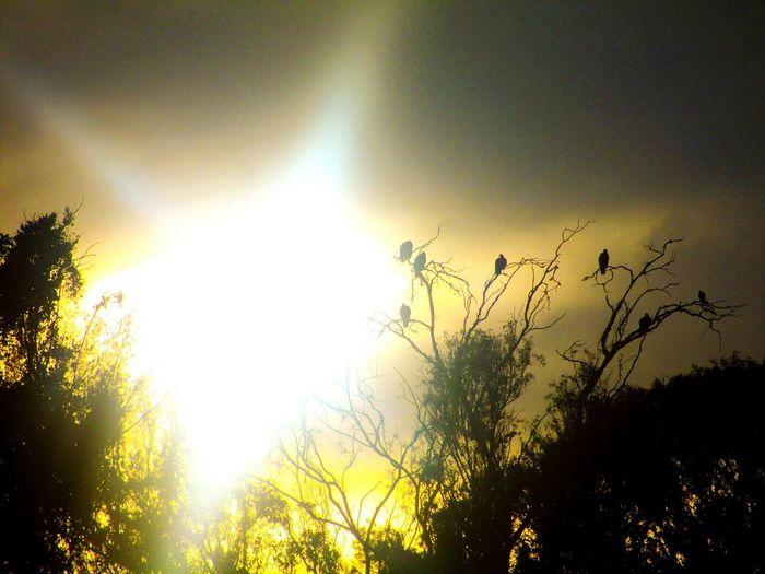 Animal Photography Ambar Atardecer Tree EyeEm Animal Lover Birds Wild Sun Suntset