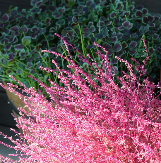 Flowers Flowers,Plants & Garden Nature_collection 自然 花と庭 EyeEm Nature Lover