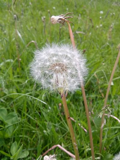 Nature Plant Fragility Growth Flower Grass Day Close-up Outdoors Green Color Beauty In Nature Flower Head Freshness