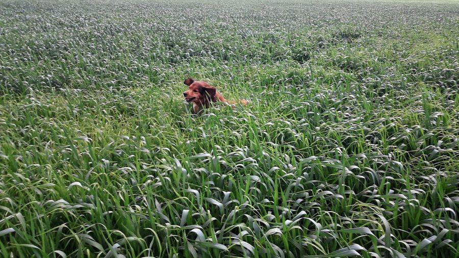 Monkey on field