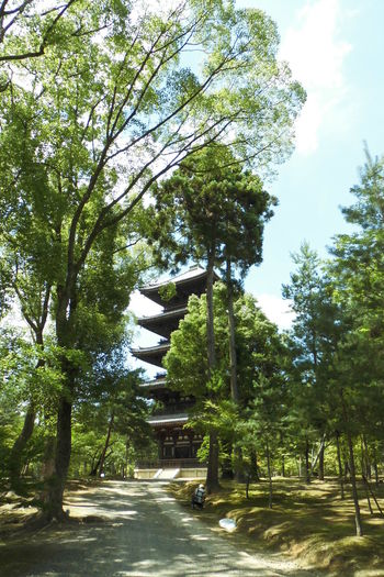 Kyoto Japan 日本 仁和寺 五重塔 Beauty In Nature Day Growth Nature No People Outdoors Sky The Way Forward Tree