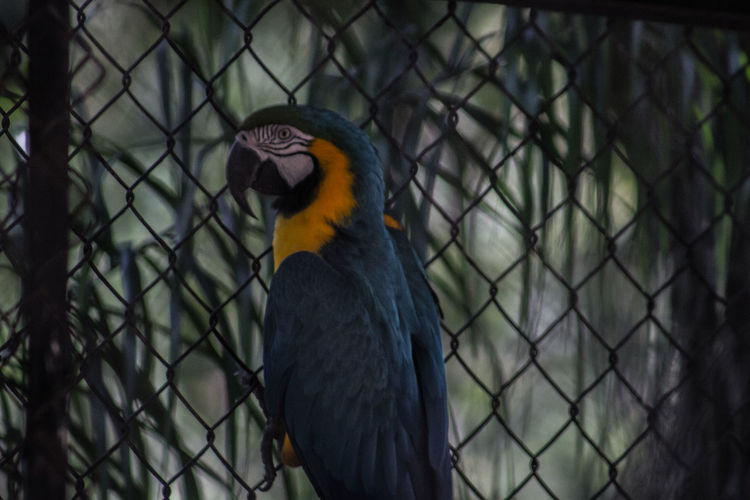 Beak Beauty In Nature Bird Chainlink Fence Close-up Fence Focus On Foreground Looking Nature One Animal Zoo