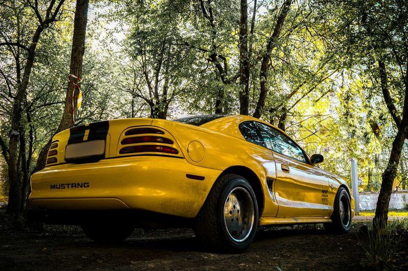 Car Yellow Ponycar Ford Mustang Carporn