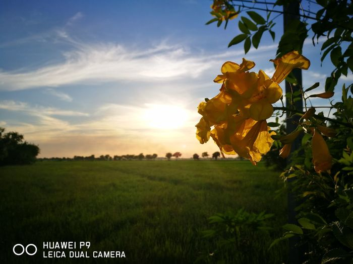Sunset Beauty Nature No People Tree Outdoors African Elephant Thailand First Eyeem Photo