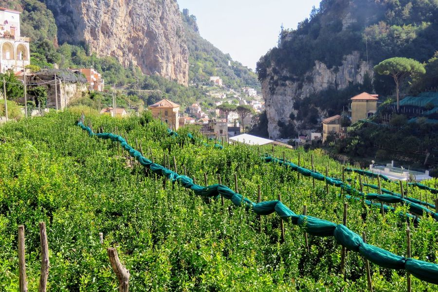 Amalfi Coast Costiera Amalfitana Architecture Beauty In Nature Building Exterior Built Structure Côte Amalfitaine Day Green Color Growth Lemon Trees Mountain Nature No People Outdoors Plant Tree Water