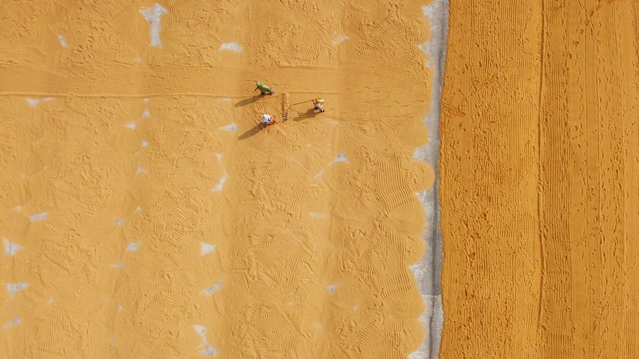 Paddy drying field