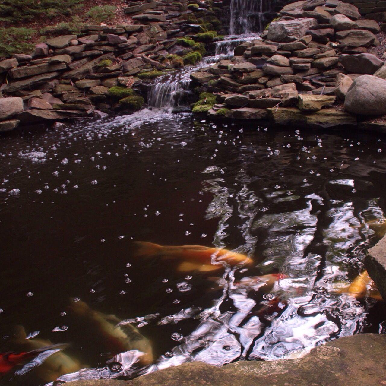 Koi Carps Swimming In Pond Against Rocks