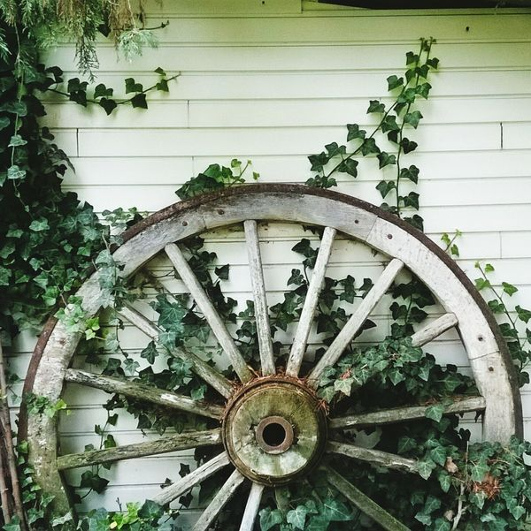 Vinesporn Vines On Wall Vines, Vintage, Nature, Soft House Wheel Cart Wheel Green Vines Vines Leaves Leaves_collection Leaves🌿 Leavesporn Leaves And Vines Green Leaves Wheelporn Wheel Wood Wheel Wooden Woodlove Circle Green Color Old-fashioned No People Outdoors Growth Leaf