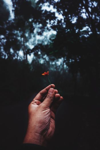Hand holding flower against blurred background