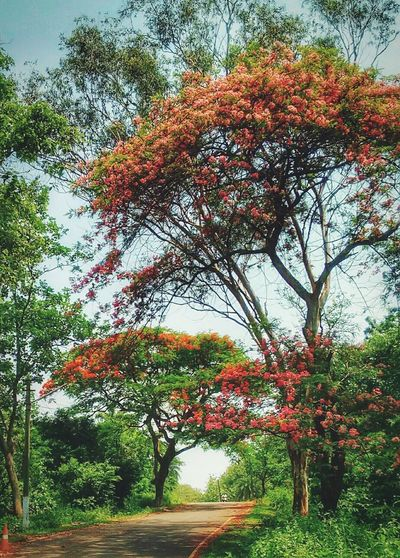Beautiful Day @ Guwahati EyeEm Nature Lover Tree And Sky Hugging A Tree Roadandscenery On The Road Pink