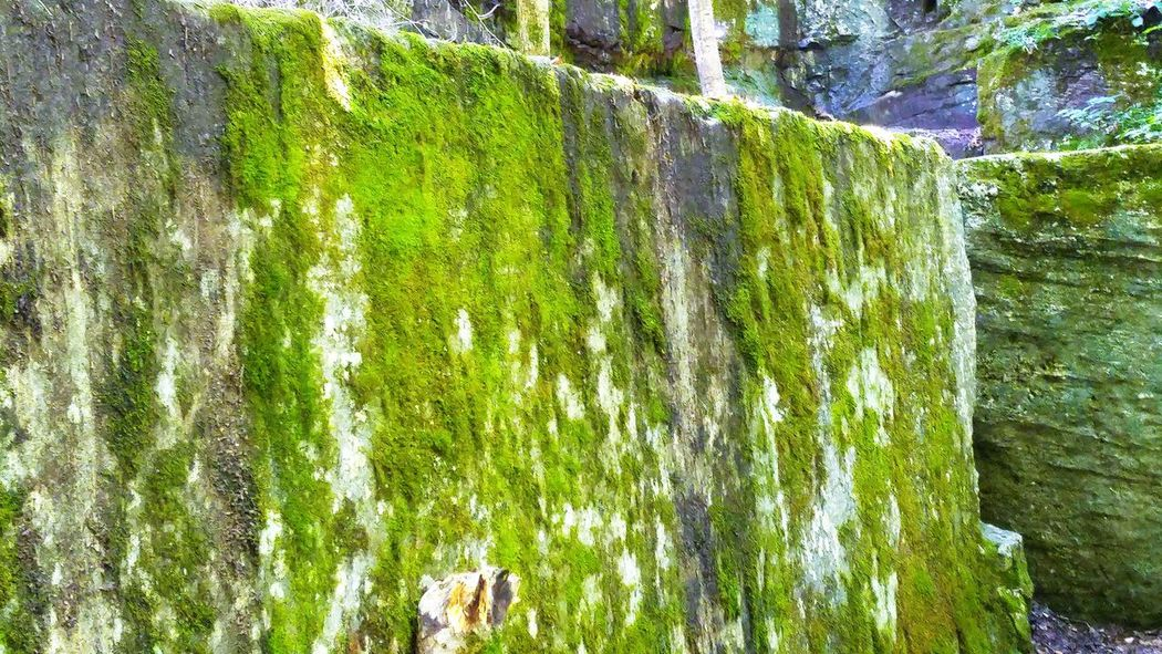 Beauty In Nature Close-up Fragility Freshness Green Indiana Indiana Limestone Limestone McCormick's Creek State Park Moss Moss-covered Mossy Mossy Stone Nature Outdoors Plant Quarry Quarry Rock Stone Stone Material Vibrant Color Weathered
