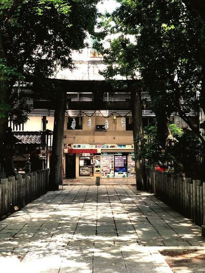 Aguchi shrine Holy Place Japan Ambient Sakai OSAKA No People Shrine Architecture Built Structure Building Exterior Tree Plant Building City Sunlight Day Nature