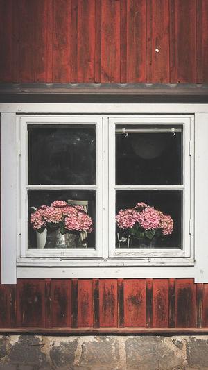 Flowers on window sill