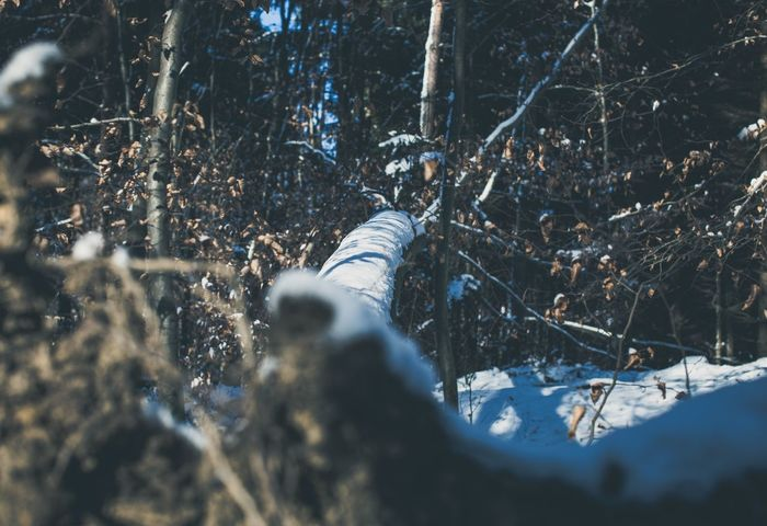 Fallen Giant Winter Nature Forest Outdoors Snow Tree Adventure Nature Photography Wallpaper Moody