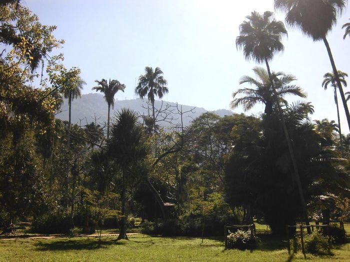 Botanical Gardens Jardimbotanicorj Trees Nature Clear Sky Plant Outdoors Sky Solitude Green Color