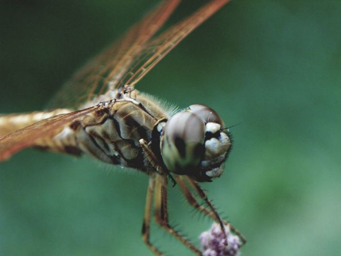 Insect Stereo Macro Close-up Animal Themes Animal Eye Animal Antenna HEAD Fly Dragonfly