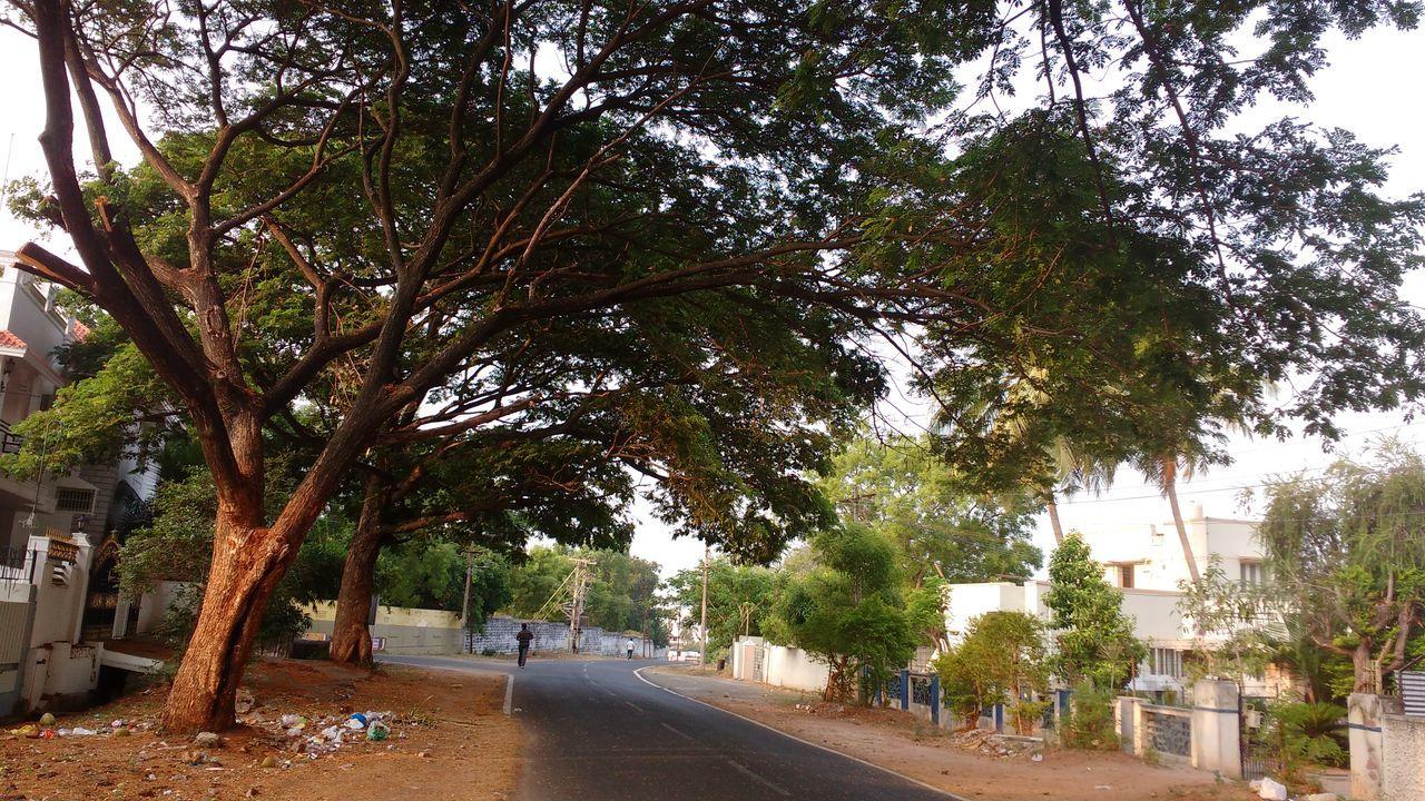 Street Along Trees