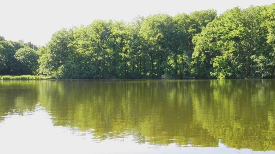 Reflection Hugging A Tree Thegreatoutdoors2015EyeemAwards EyeEm Nature Lover Water Nature Green Waterside