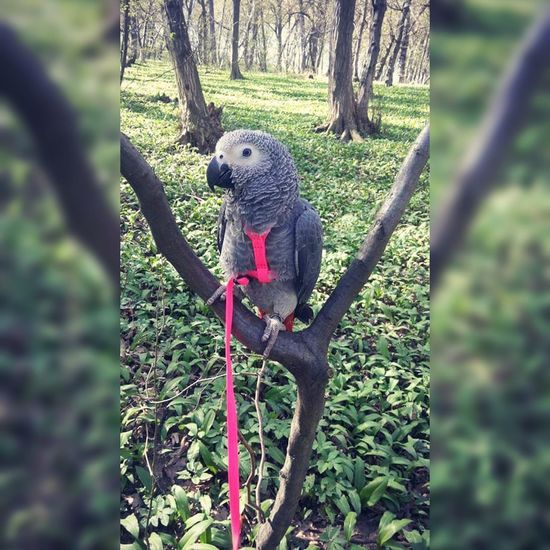 Animal Themes One Animal Tree Outdoors Nature Green Color Mammal Day No People Beauty In Nature Parrot Parrots Parrot Lover Parrot Love Parrot❤ Parrot Bird Jako