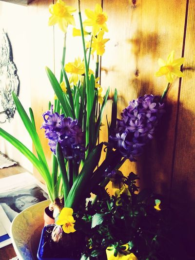 Springtime 🌾🌷🌾🌷🌾🌷🌾Spring is in my house 🌾🌷🌾🌷🌾🌷🌾 First Eyeem Photo