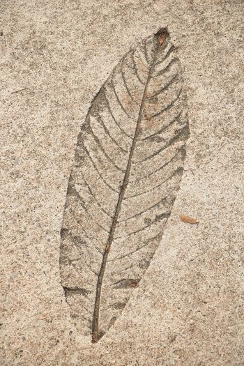 Leaf print on cement floor : Cement Floor Wall - Building Feature Nature No People Pattern Textured  Close-up Outdoors Backgrounds Day Art The Past Leaf High Angle View Plant Part Land Architecture Solid Rock Beige Sunlight Paleontology Sandstone Ancient History