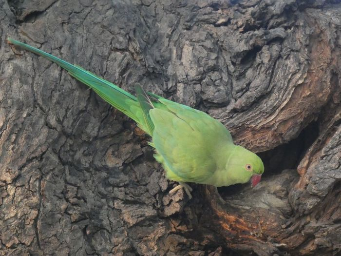 Close-up of parrot perching on tree trunk