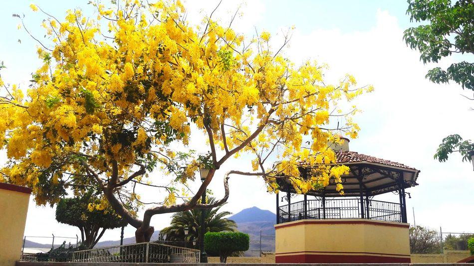 Quiosco. 31/mayo/2017 Tree Sky No People Life Is Beautiful Woman Around The World Perfectnature Rural Scene Rural Life Yellow Suunyday🌄