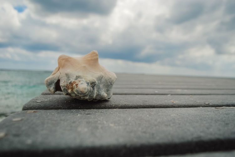 seashell on a boardwalk, close up Beach Beach Photography Close Up Chonch Conch Islandlife Caribbean Tropical Paradise Cloudy Port Boardwalk Vacations Adventure Club Ready To Dive Sea Beach Sea Life Water Humpback Whale Sky Animal Themes Close-up Cloud - Sky