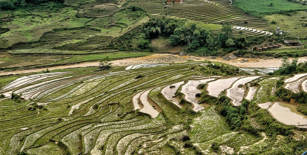 Vietnam Sapa Plant Growth High Angle View Day Farm Agriculture No People Landscape Tranquility Field Nature Rural Scene Green Color Land Environment Tranquil Scene Pattern Beauty In Nature Scenics - Nature Outdoors