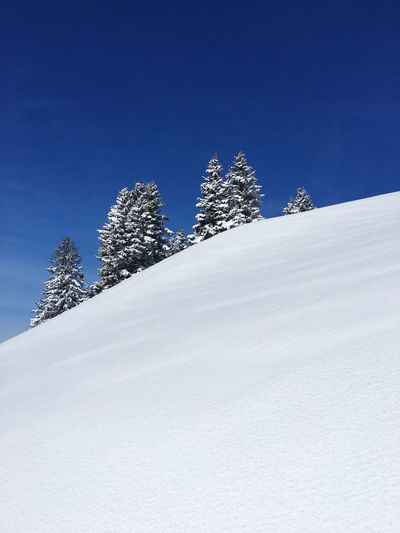 Low angle view of trees on snow against blue sky