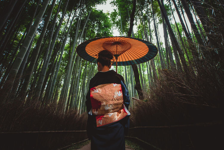 Rear view of woman holding umbrella standing by tree in forest