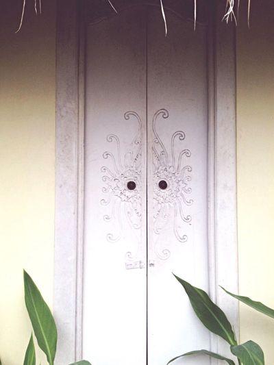Die Tür. Plant